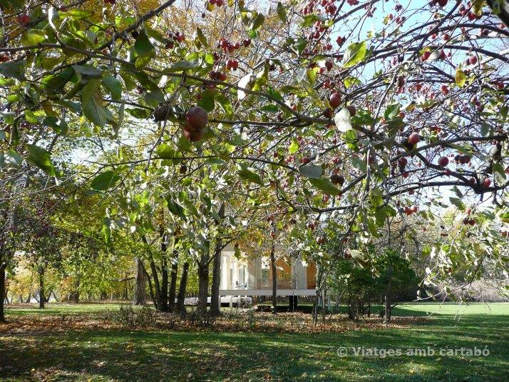 La Farnsworth house entre els arbres