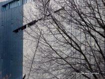 Detall façana exterior amb arbre