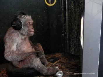 Banksy The Village Petstore Monkey
