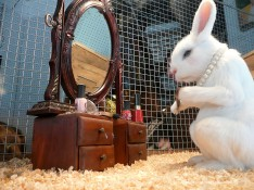 Un conill maquillant-se