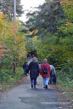 Caminant pel bosc buscant més escultures