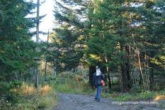 Caminant pels boscos de Frognerseteren