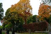 Els colors de la tardor al cementiri