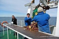 Stykkishólmur creuer el resultat de la pesca
