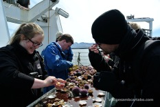 Stykkishólmur creuer sushi de vieira i garota