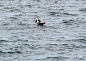 Stykkishólmur frarets a l'aigua