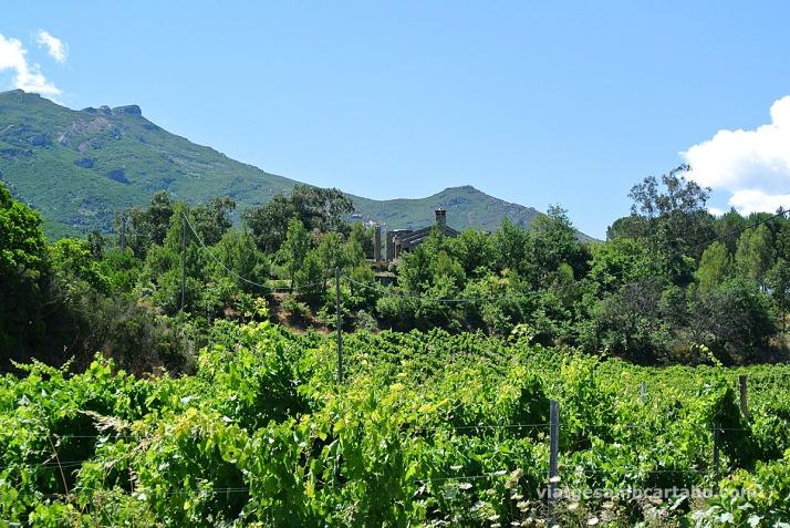 U Castellu Piattu entre vinyes
